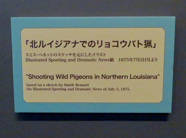 名古屋市科学館「絶滅動物研究所」展 No - 41:空を覆うリョコウバトとそれを狩る人たちが描かれた絵の説明