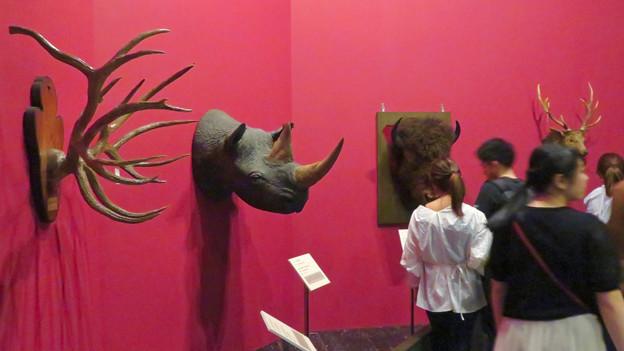Photos: 名古屋市科学館「絶滅動物研究所」展 No - 53