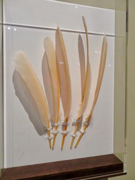 名古屋市科学館「絶滅動物研究所」展 No - 72:トキの羽