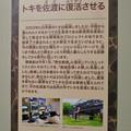 名古屋市科学館「絶滅動物研究所」展 No - 74:トキ復活事業の説明