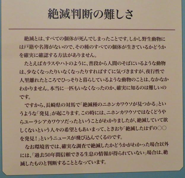名古屋市科学館「絶滅動物研究所」展 No - 81:絶滅判断の難しさについて
