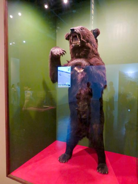 名古屋市科学館「絶滅動物研究所」展 No - 88:ツキノワグマの剥製