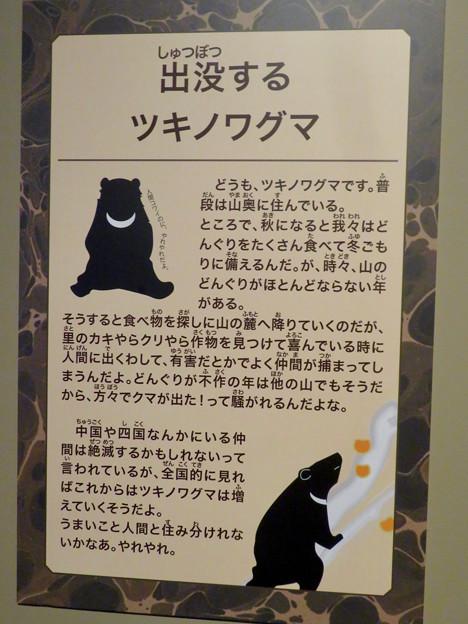 名古屋市科学館「絶滅動物研究所」展 No - 90:ツキノワグマの説明