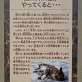 名古屋市科学館「絶滅動物研究所」展 No - 95:島に外来種がやってくると…