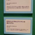 Photos: 名古屋市科学館「絶滅動物研究所」展 No - 114:コアジサイのデコイと巣のモデルの説明