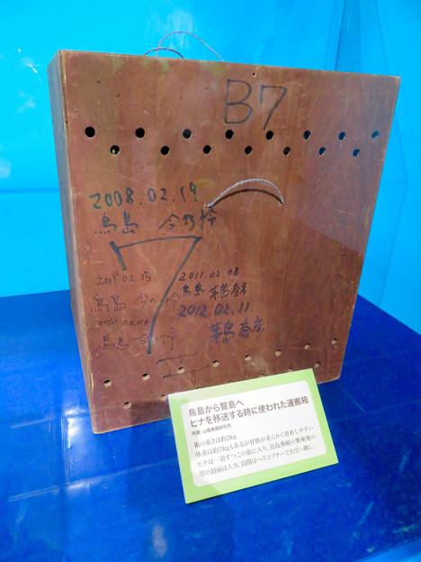 名古屋市科学館「絶滅動物研究所」展 No - 126:アホウドリ復活プロジェクトで用いられたヒナ移送用の箱