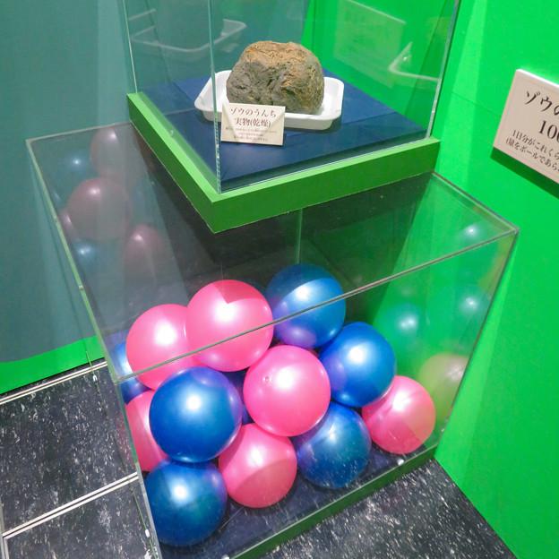 名古屋市科学館「絶滅動物研究所」展 No - 134:ゾウのうんち1日分(約100kg)