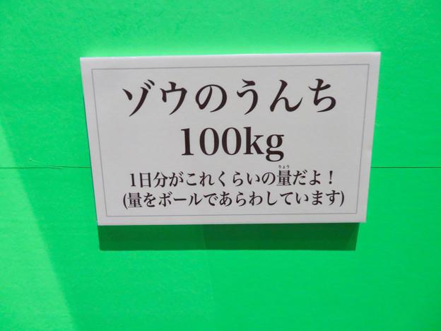 名古屋市科学館「絶滅動物研究所」展 No - 135:ゾウのうんちの説明