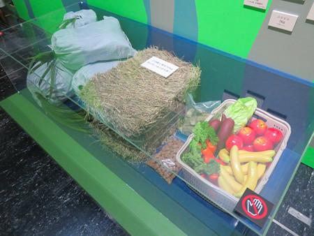 名古屋市科学館「絶滅動物研究所」展 No - 136:アジアゾウが一日に食べる量