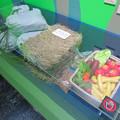 Photos: 名古屋市科学館「絶滅動物研究所」展 No - 136:アジアゾウが一日に食べる量