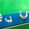 Photos: 名古屋市科学館「絶滅動物研究所」展 No - 140:ニシゴリラと人間の頭部の骨
