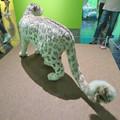 Photos: 名古屋市科学館「絶滅動物研究所」展 No - 143:ユキヒョウの剥製
