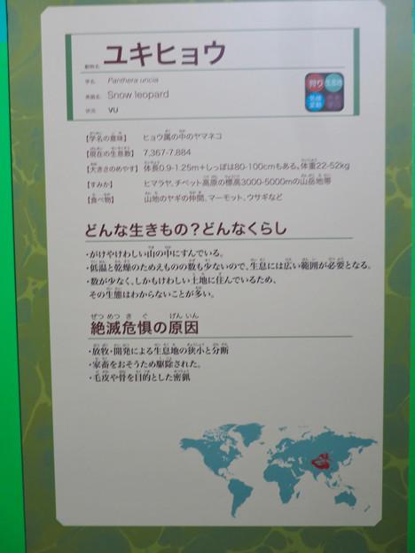 名古屋市科学館「絶滅動物研究所」展 No - 145:ユキヒョウの説明
