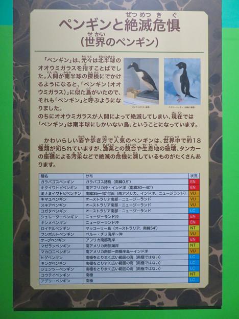 Photos: 名古屋市科学館「絶滅動物研究所」展 No - 148:ペンギンの絶滅危機について