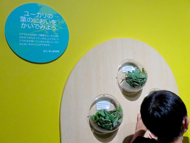 Photos: 名古屋市科学館「絶滅動物研究所」展 No - 155:ユーカリの葉の匂い体験コーナー