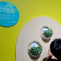 名古屋市科学館「絶滅動物研究所」展 No - 155:ユーカリの葉の匂い体験コーナー