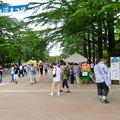 Photos: 鶴舞公園納涼まつり 2019 No - 2:祭りよりポケモンGoの人たちがいっぱい!?