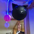 ちょっと可愛らしかった松坂屋名古屋店の猫型提灯 - 3