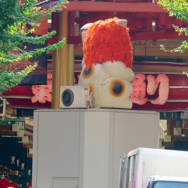大須商店街:映画「ライオンキング」PRのためライオンになってた招き猫広場の招き猫 - 9