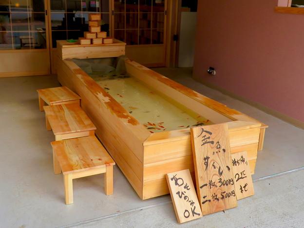 犬山城下町:金魚すくいのお店 - 2