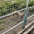 Photos: 春日井市出川町:放牧されてるポニー - 1