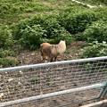 Photos: 春日井市出川町:放牧されてるポニー - 3