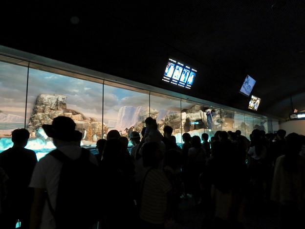 沢山のペンギンがいた名古屋港水族館(食事の時間) - 1