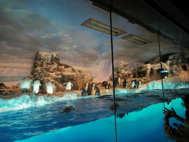 沢山のペンギンがいた名古屋港水族館(食事の時間) - 2