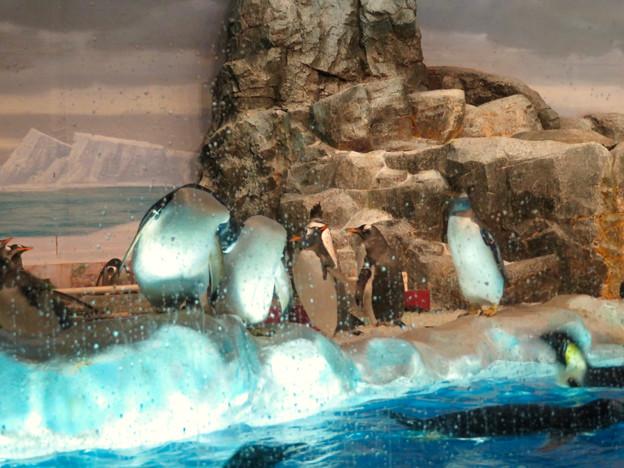沢山のペンギンがいた名古屋港水族館(食事の時間) - 3