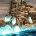 Photos: 沢山のペンギンがいた名古屋港水族館(食事の時間) - 3