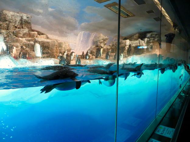 沢山のペンギンがいた名古屋港水族館(食事の時間) - 4