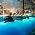 Photos: 沢山のペンギンがいた名古屋港水族館(食事の時間) - 4