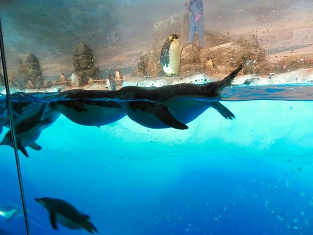 沢山のペンギンがいた名古屋港水族館(食事の時間) - 5