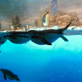 Photos: 沢山のペンギンがいた名古屋港水族館(食事の時間) - 5