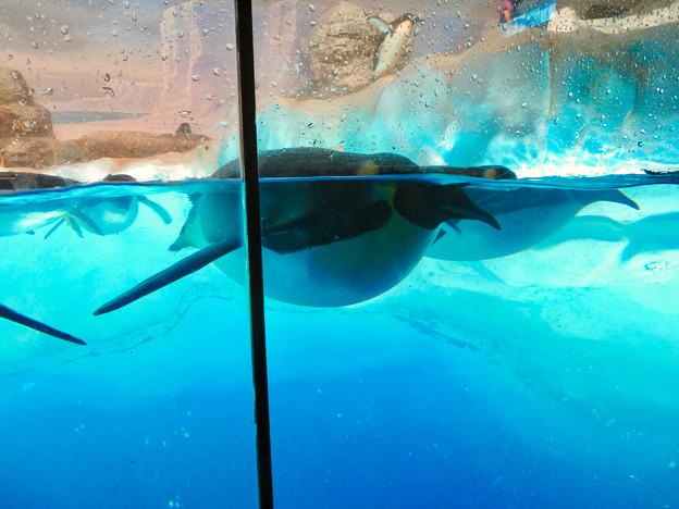 沢山のペンギンがいた名古屋港水族館(食事の時間) - 6