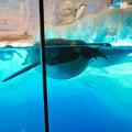 Photos: 沢山のペンギンがいた名古屋港水族館(食事の時間) - 6