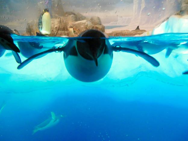 沢山のペンギンがいた名古屋港水族館(食事の時間) - 7