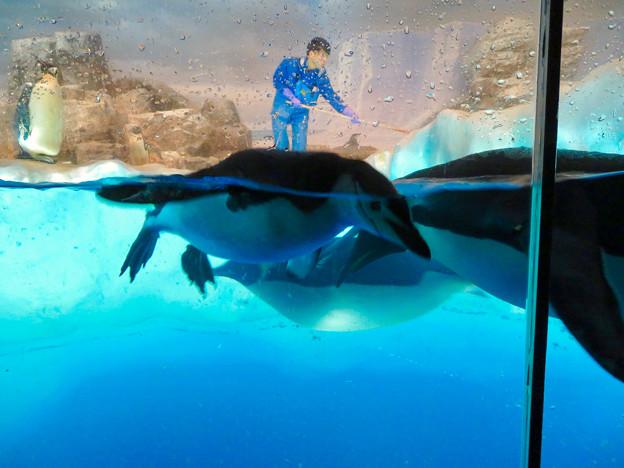 沢山のペンギンがいた名古屋港水族館(食事の時間) - 9
