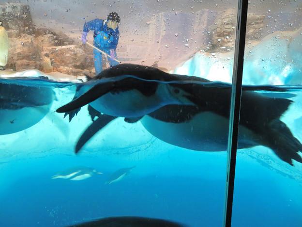 沢山のペンギンがいた名古屋港水族館(食事の時間) - 10