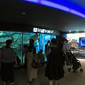 リニューアルしてた名古屋港水族館の「ウミガメ回遊水槽」 - 1