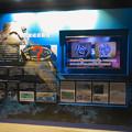 リニューアルしてた名古屋港水族館の「ウミガメ回遊水槽」 - 2