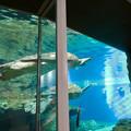 リニューアルしてた名古屋港水族館の「ウミガメ回遊水槽」 - 3