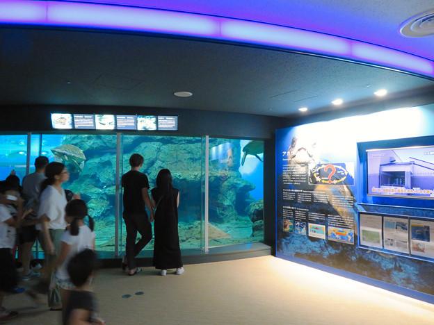 リニューアルしてた名古屋港水族館の「ウミガメ回遊水槽」 - 9