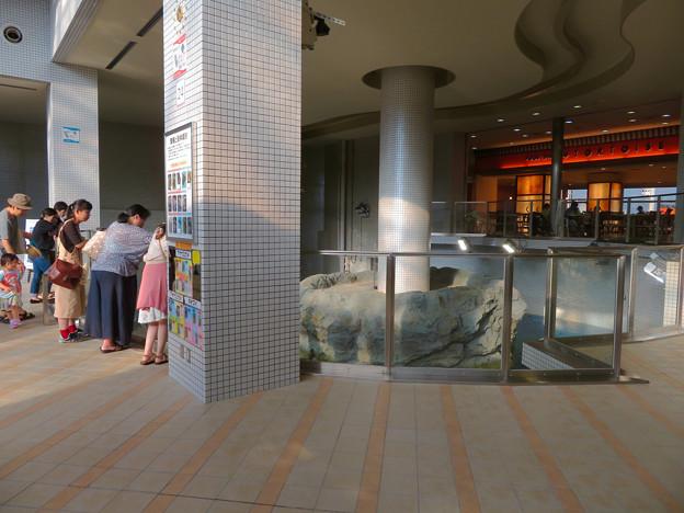 リニューアルしてた名古屋港水族館の「ウミガメ回遊水槽」 - 10
