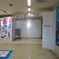 名古屋港水族館「カラフルコレクション ~絢爛華麗な水の生き物たち」展 - 1
