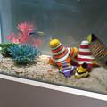 名古屋港水族館「カラフルコレクション ~絢爛華麗な水の生き物たち」展 - 3