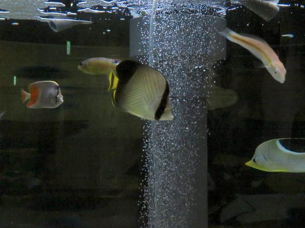 名古屋港水族館「カラフルコレクション ~絢爛華麗な水の生き物たち」展 - 9