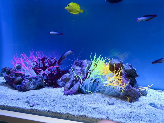名古屋港水族館「カラフルコレクション ~絢爛華麗な水の生き物たち」展 - 12
