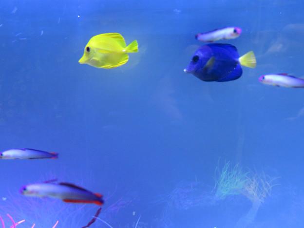 名古屋港水族館「カラフルコレクション ~絢爛華麗な水の生き物たち」展 - 13