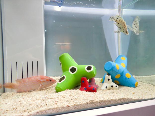 名古屋港水族館「カラフルコレクション ~絢爛華麗な水の生き物たち」展 - 22